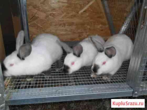 Кролики Мокшан