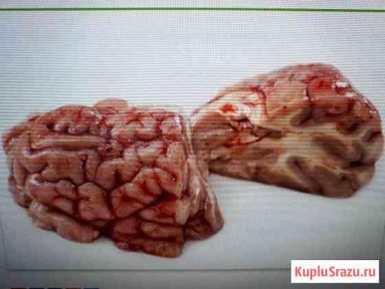 Продам говяжьи мозги Севастополь