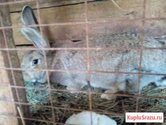 Кролики самцы и самки Липецк