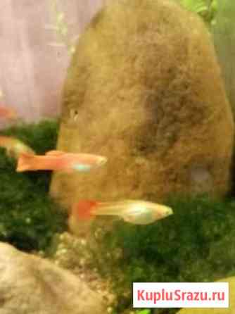 Аквариумные рыбки и растения Железнодорожный