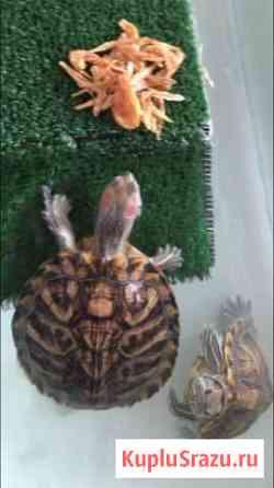Черепахи в добрые руки Щербинка