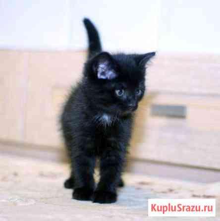 Котенок мальчик в добрые ручки. Здоров, привит Краснодар