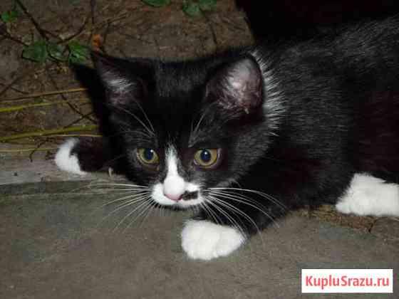 Домашние котята Краснодар