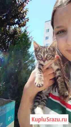 Котёнок мальчик бенгал ищет дом Снять с продажи Краснодар