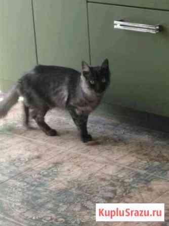 Ангорская кошечка ищет хозяйку Краснодар