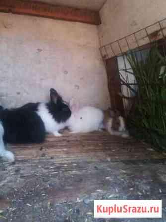 Декоративные крольчата Анапа
