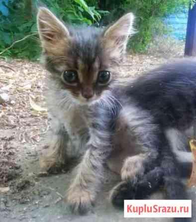 Котенок в хорошие руки Краснодар