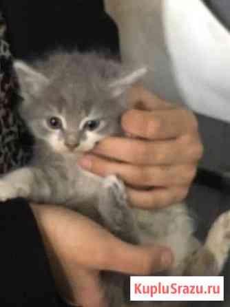Отдам котят в добрые руки, бесплатно Краснодар