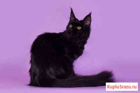 Лучшие котята Краснодар