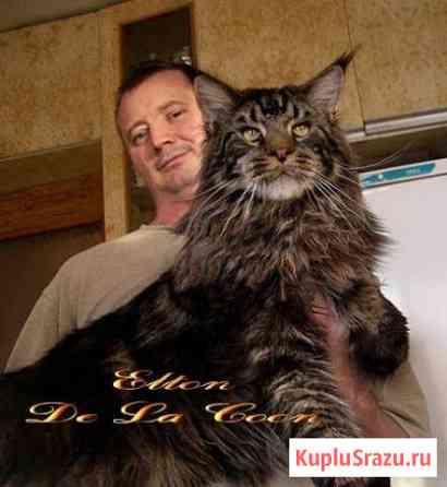Маленькая рысь с характером ласкового котенка Краснодар