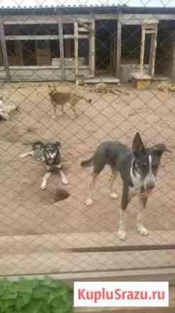 Охотничьи собаки Братск
