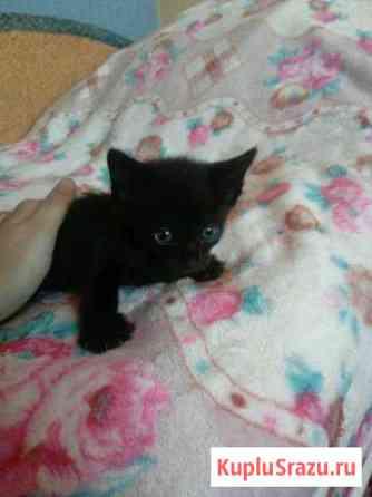 Отдам черного котенка Улан-Удэ