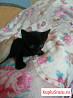 Отдам черного котенка