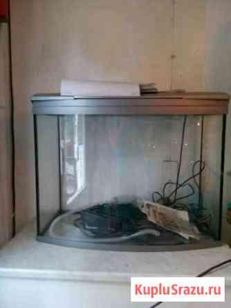 Большой аквариум Тюмень