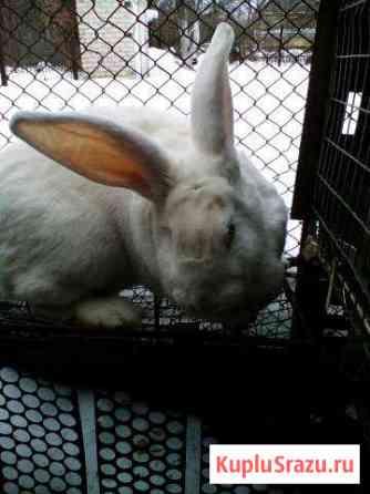 Кролик Липецк