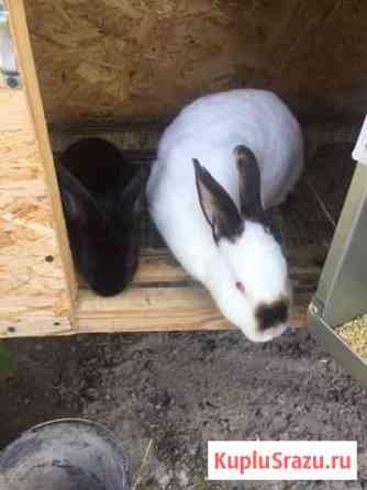 Кролики разных пород Краснодар