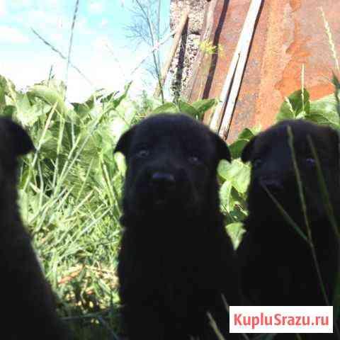 Собака Магнитогорск