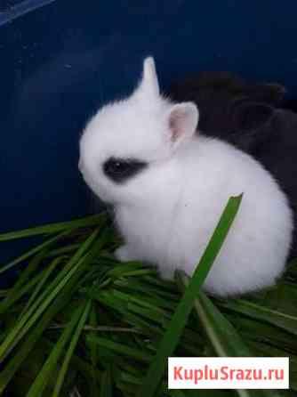 Карликовые крольчата продаются Екатеринбург