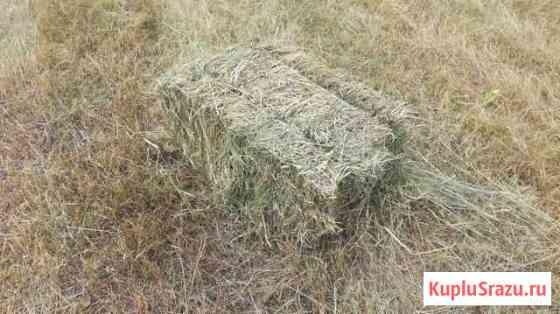 Продается сено в тюках Таловая