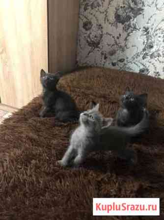 Котятки Стерлитамак