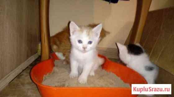 Игривые котятки Улан-Удэ