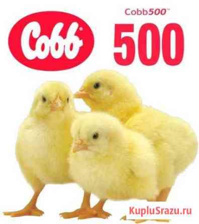 Цыплята бройлеры, Чехия Киров