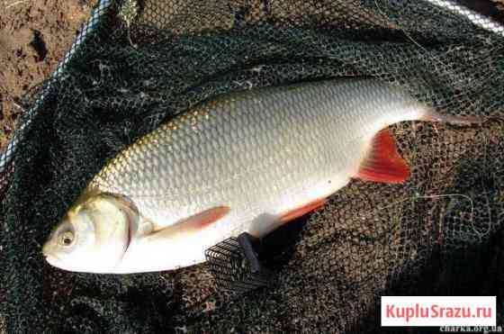 Рыба на корм скоту Томск