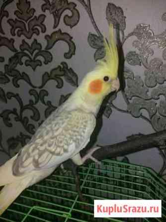 Попугай Ижевск