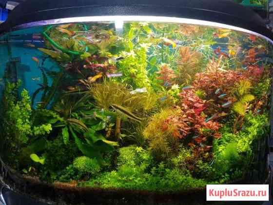 Растения для аквариума.почвопокровные.водоросли Ижевск