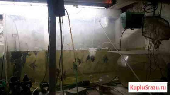 Аквариум из оргстекла 250 и 300 литров Навля