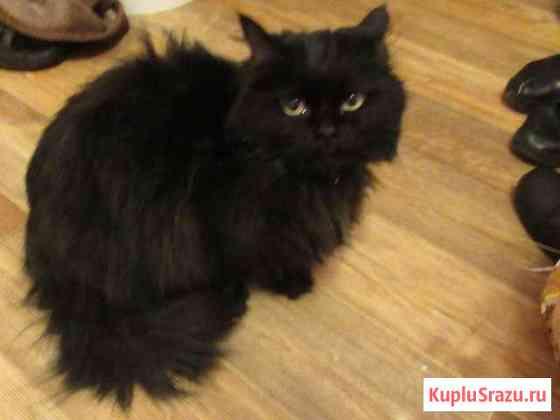 Найдены две ласковые кошечки-похожи на персидскую Ставрополь