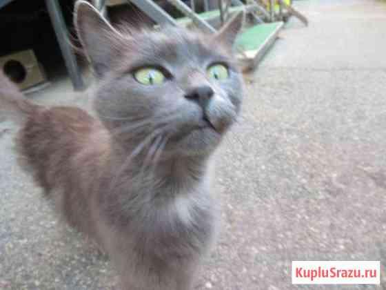 Ищем прежних или новых хозяев котику и кошечке-ю/з Ставрополь