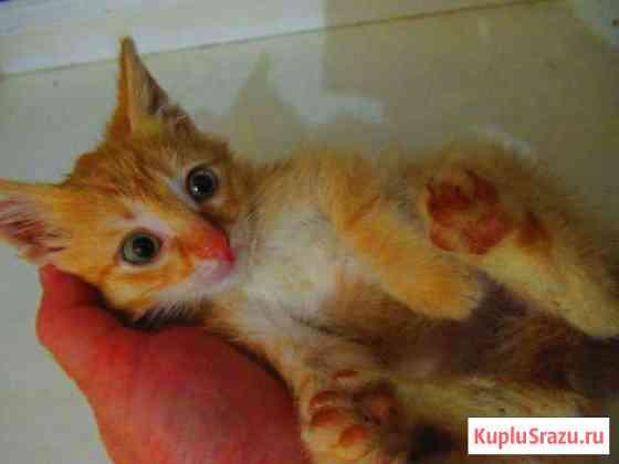 Котик 3месяца добрым ответственным хозяевам Ставрополь