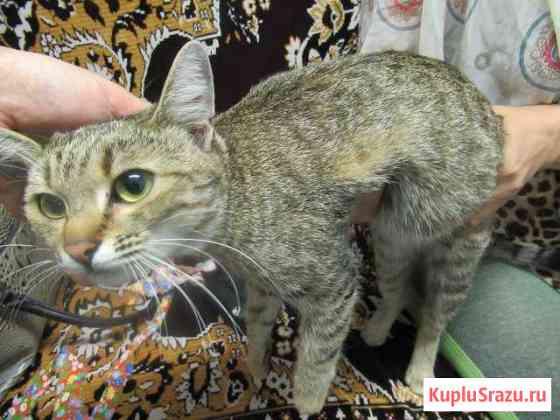 Кошечка с 20.08 ищет прежних или новых хозяев Ставрополь