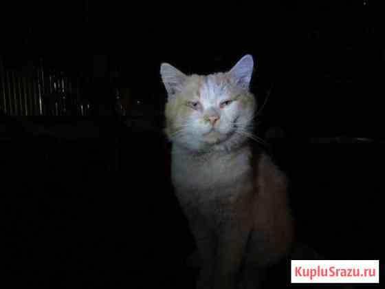 Ищу прежних/новых хозяев взрослому ласковому коте Ставрополь