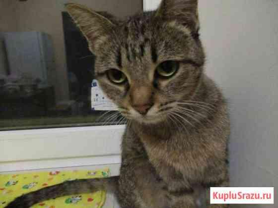 Кошечка с Родосской д.11 ищет прежних/новых хозяев Ставрополь