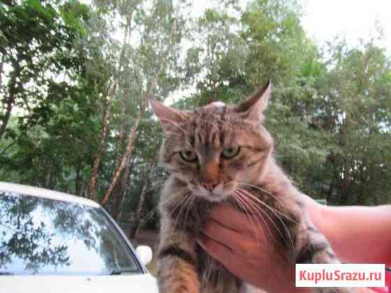 Котик взрослый ищет хозяев Ставрополь