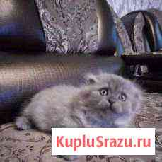 Продам котенка Улан-Удэ
