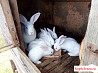Кролики и крольчата разных возрастов