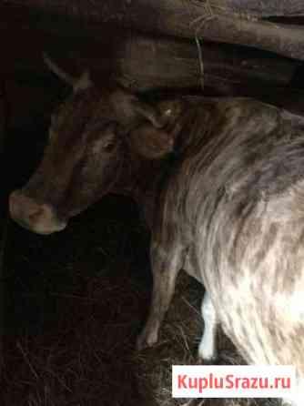 Корова Смоленск