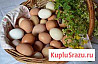 Яйца домашние с Волгоградской области