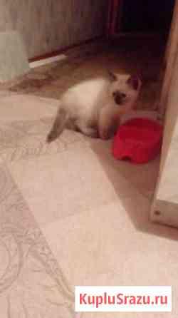 Два котенка -девочки Озёры
