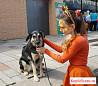 Чальда - универсальная собака для семьи и дома