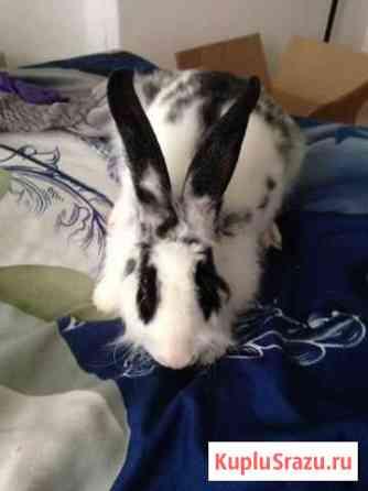 Кролик + клетка с кормом,сеном,наполнителем,полный Екатеринбург