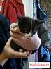Котята (2 месяца) хотят найти дом