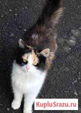 Котята подростки Чаплыгин