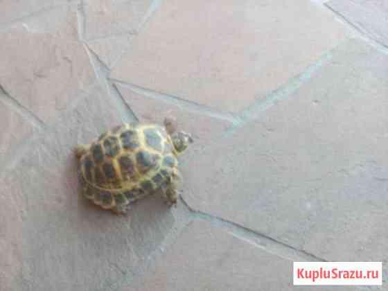 Сухопутные черепахи Липецк