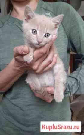 Котенок, доставка, 2 кг корма в подарок Ставрополь