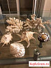 Кораллы и ракушки