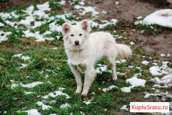 Белочка - шикарная блондинка Нижневартовск